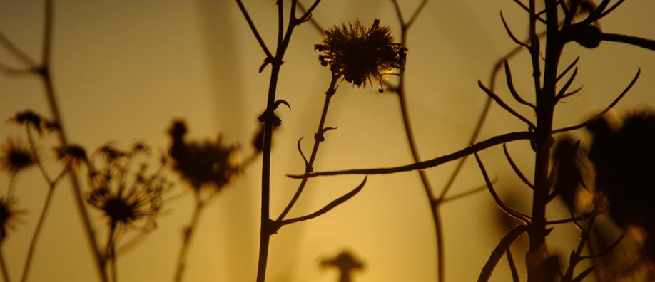 morphoso-sun-plant-istockphoto918x396