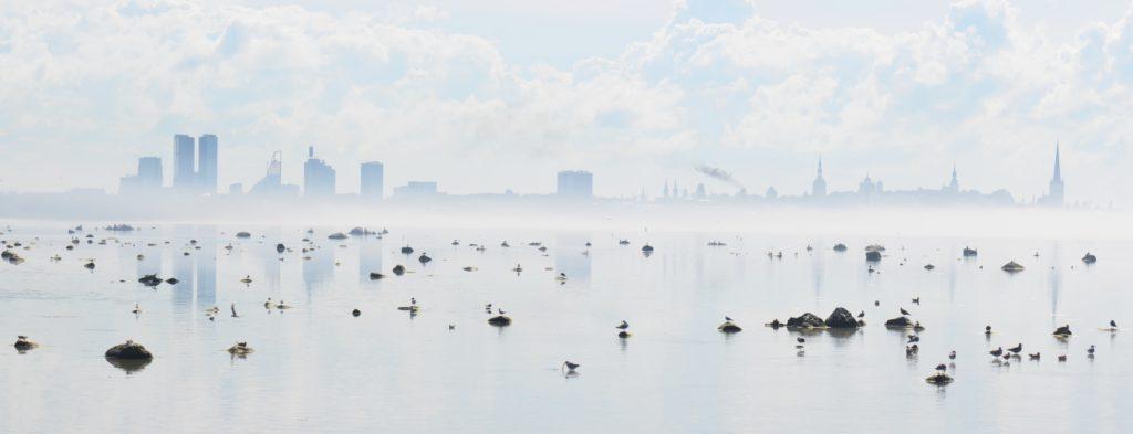 Tallin. Photo: Toimetaja Tõlkebüroo